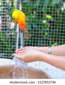 A cute little parrot drinking water off a faucet while a tourist is washing her hands.