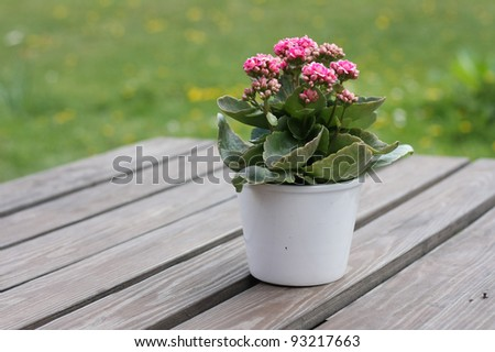 Cute little pot plant on outdoor table.