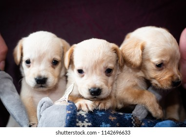 Two Cute Little Puppies White Colour Stock Photo Edit Now