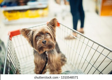 Cute little puppy dog sitting in a shopping cart on blurred shop mall background with people. selective focus macro shot with shallow DOF top view