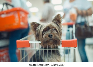 Cute little puppy dog sitting in a shopping cart on blurred mall background. selective focus macro shot with shallow DOF .