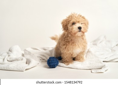 Cute little puppy playing with a toy on a towel on a white background