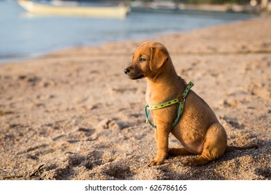 Cute little puppy sitting on the beach
