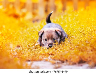cute little puppy walking on the grass in the garden summer fun wagging his tail