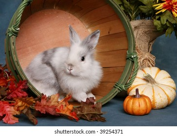 Cute little rabbit in autumn scene