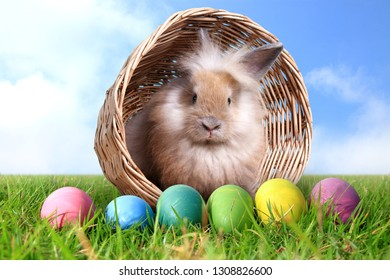 Cute little rabbit in a basket decorated with many colored eggs Put on the green grass. Happy Easter!