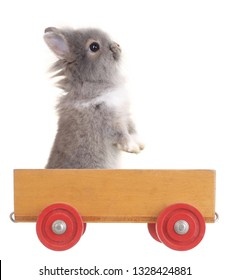 Cute little rabbit bunny is standing up in wooden car toy