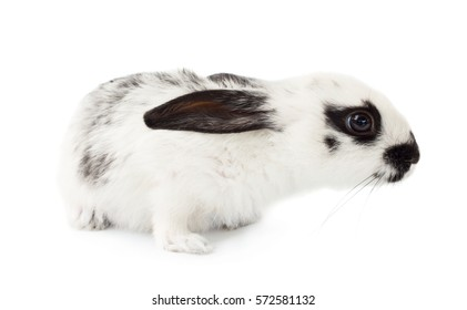 Cute little rabbit isolated on white background