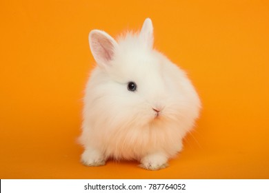 Cute little rabbit on the color background.