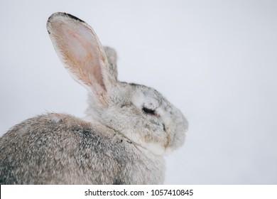 Cute little rabbit in snow