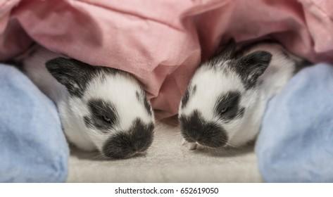 cute little rabbits
