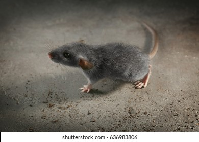 Cute little rat on gray background