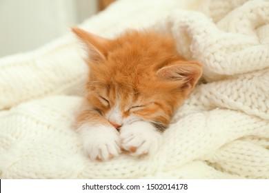 Cute little red kitten sleeping on white knitted blanket