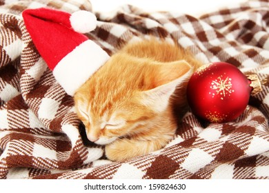 Cute little red kitten sleeps in plaid close up