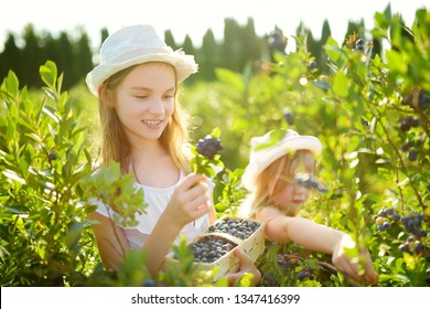 Cute little sisters picking fresh berries on organic blueberry farm on warm and sunny summer day. Fresh healthy organic food for small kids. Family activities in summer.