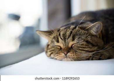 Cute little sleeps copy-space. Banner