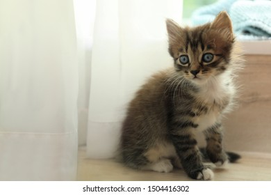 Cute little striped kitten near window at home
