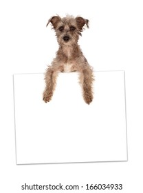 A cute little terrier mixed breed dog holding up a blank white cardboard sign. Add in your advertisement text.