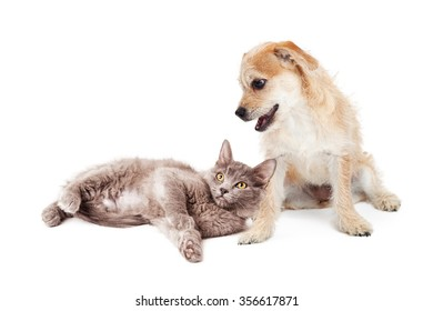 Cute little terrier puppy with a happy expression looking down at a kitten laying at his feet