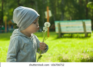 Cute little toddler boy playing with flowers in park at the day time