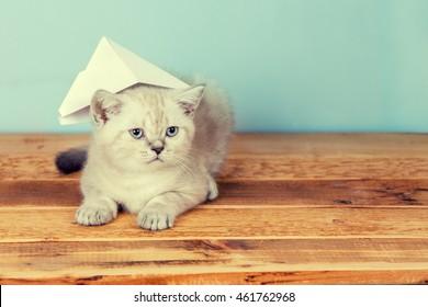 Cute little wearing paper hat