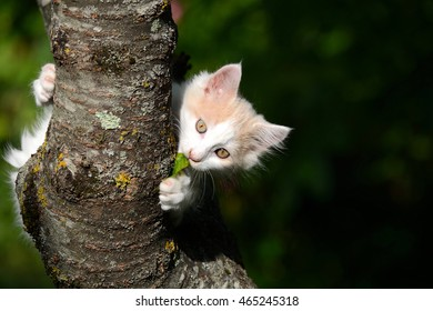 Cute little white kitten sitting in tree.