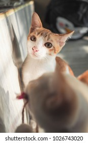 Cute little white and orange tabby cat,yellow eyes,pink nose,looking straight at camera.Playing in morning light inside the house with others.Sit beside white marble stairs.Cute cat background.