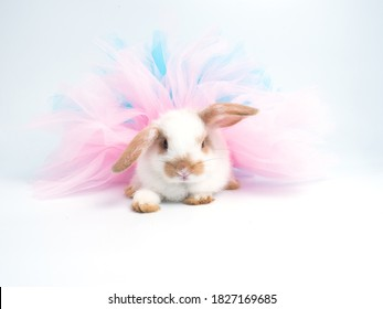 Cute little white rabbit with brown ears wearing pink and blue tutu dress on white background.