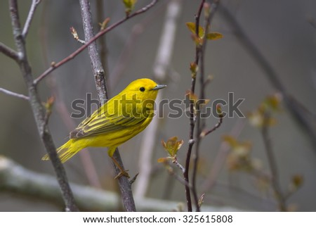 Little Yellow Bird >> Cute Little Yellow Bird Forest Scene Stock Photo Edit Now