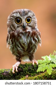 The cute lonely baby of owl