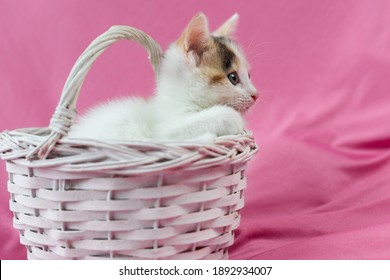Cute and lovely kitten is sleeping in a white wicker basket on a pink background. Place for text. Valentine's Day. Pets