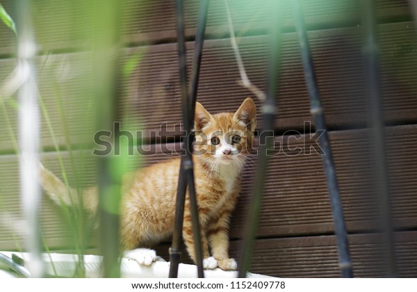 cute lovely street cat