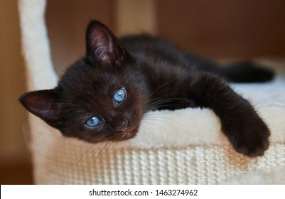 Black Cat Blue Eyes High Res Stock Images Shutterstock