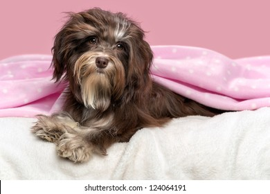 Dog Pink Background Images, Stock Photos & Vectors