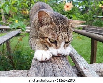 Cute male cat scratching on old rusty wood in the garden during beautiful day. Close up