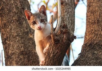 Cute and mischievous cat