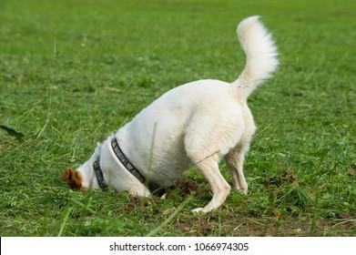 Cute mixed breed dog dig a hole