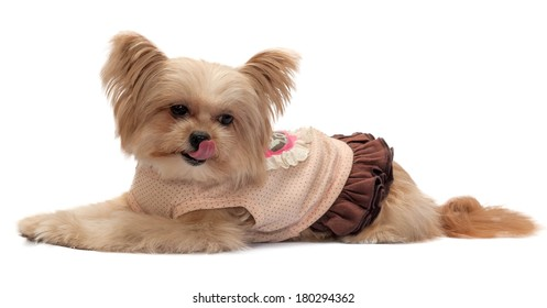 cute mixed breed dog getting hungry isolated in white background with clipping path