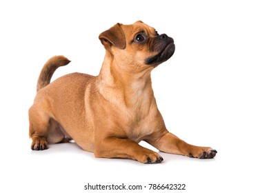 Cute mixed breed dog isolated on white