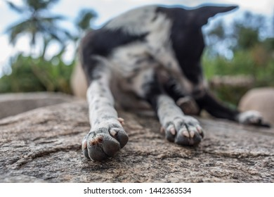 A cute mixed breed dog laying on a rock outside in a tropical location on a summer afternoon