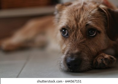 Cute mixed breed dog lying on the floor