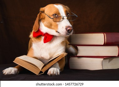 Cute mixed breed dog posing as an intellectual