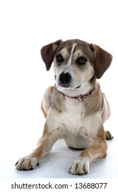 Cute mixed breed dog sitting against a white background