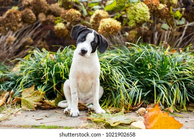 Cute mixed breed puppy in the grass