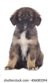 Cute mixed breed puppy isolated