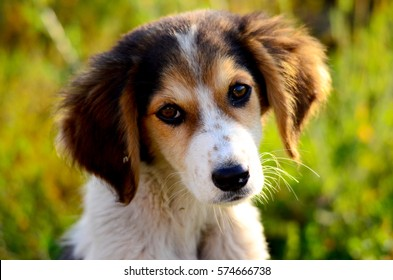 Cute mixed breed stray dog with big ears , morning shot