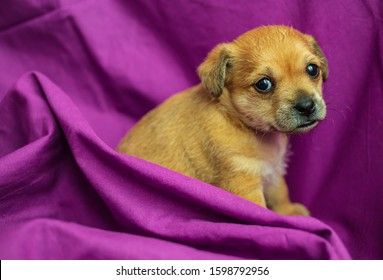 Cute mixed-breed puppy in folds of purple fabric