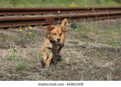 Cute mixed-breed puppy running on the field