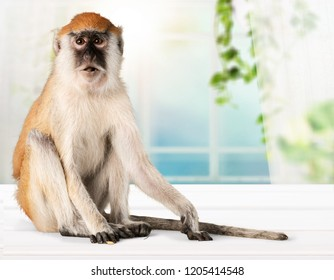 Cute Monkey animal Isolated over white background