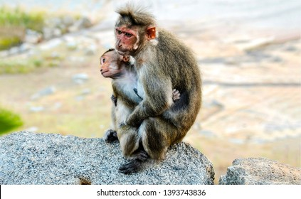 Cute monkey with cub portrait. Monkey mother love